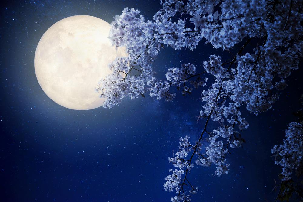 лунный календарь садовода