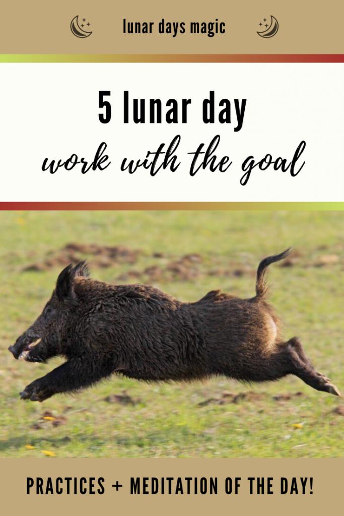 5 lunar day