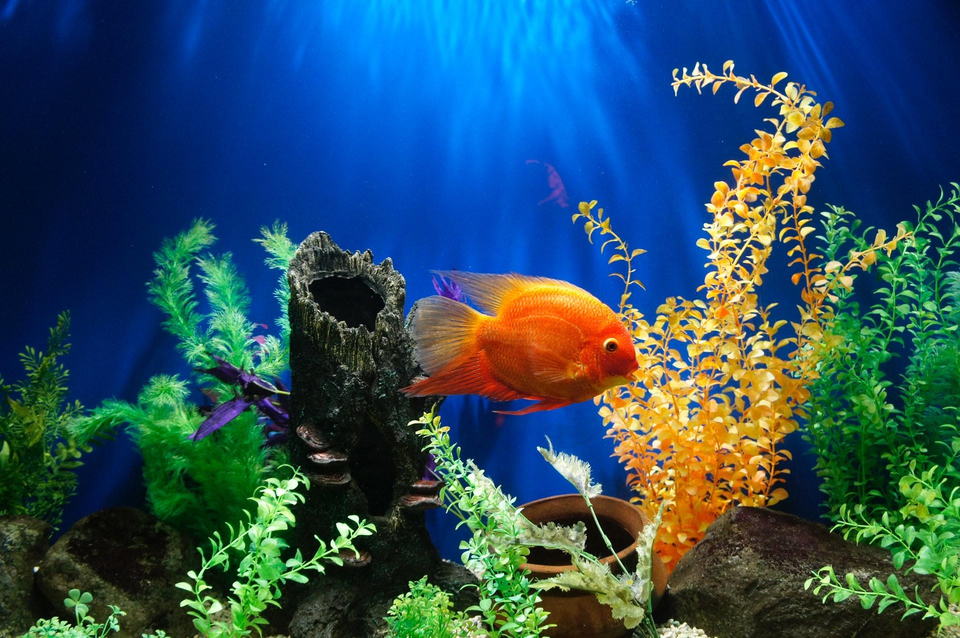 proper fish care